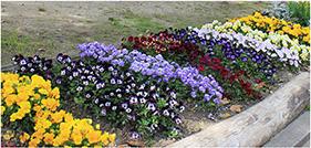 花壇のイメージ